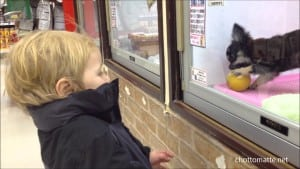 It's hard to resist that doggie in the window - but I wish more people did