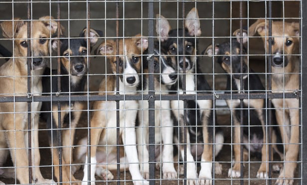 help the puppy mill project to help to save puppy mill