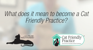Cat expert Steve Dale and Dr. Colleen Currigan of American Association of Feline Practitioners