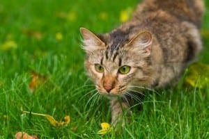 Rodents actually top cat hunting list. Billions and billions of birds aren't killed in the U.S. In fact, billions and billions of birds never existed in the U.S.