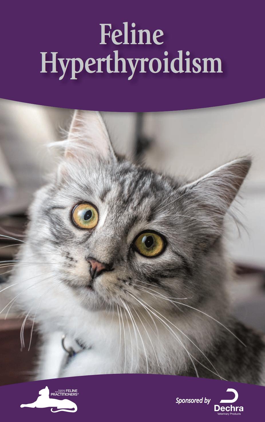 understanding hyperthyroid disease in cats steve dale. Black Bedroom Furniture Sets. Home Design Ideas