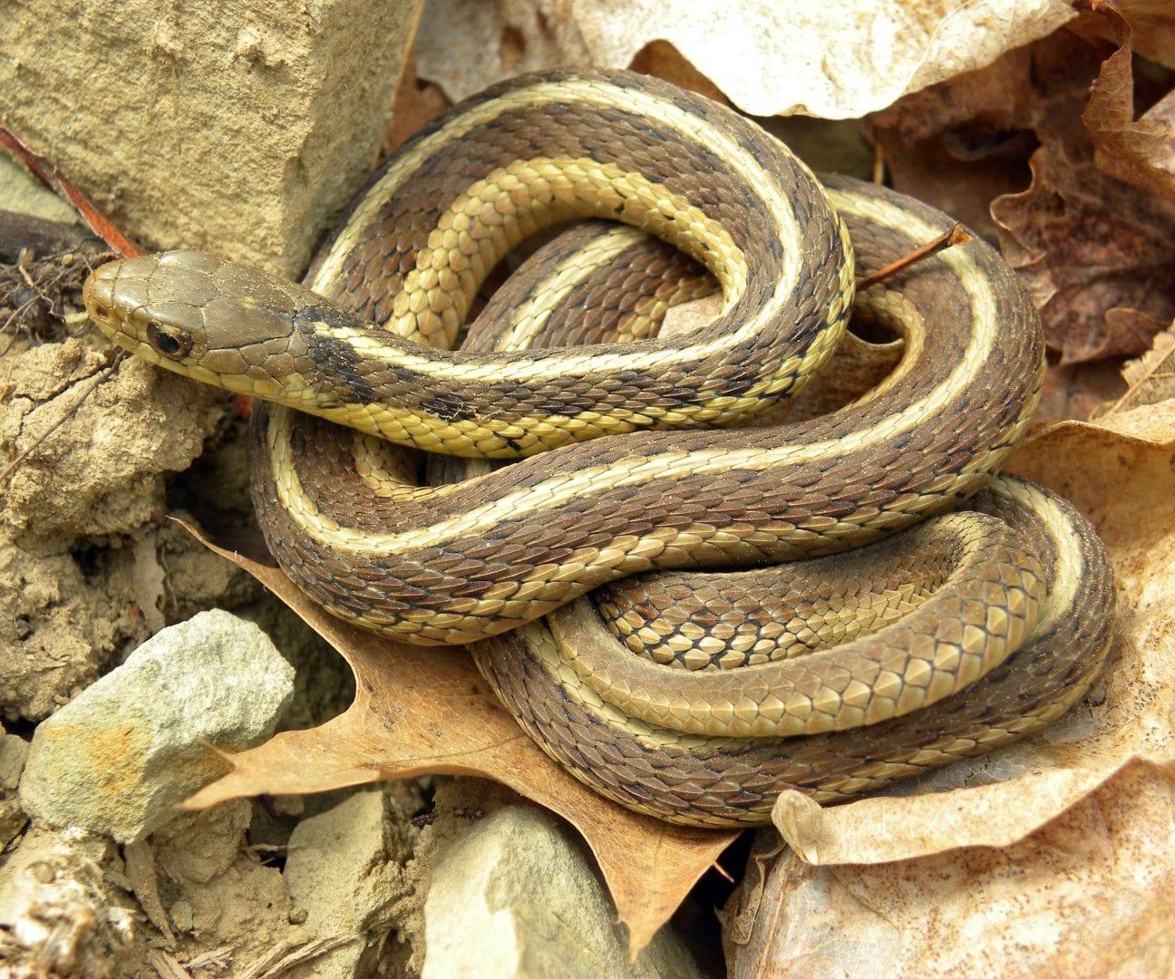 how to keep garter snakes away