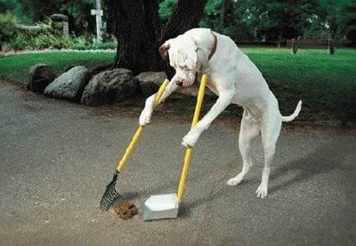 If only we could train our dogs to do this