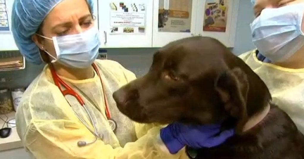 Pet-expert-Steve-Dale-and-Dr.-Natalie-Marks-on-dog-flu