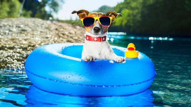 pet expert Steve Dale on hyperthermia or heat stroke in dogs