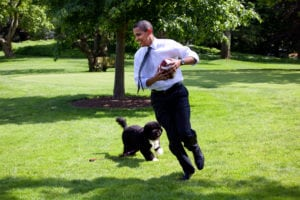 Play brings social joy to people and pets
