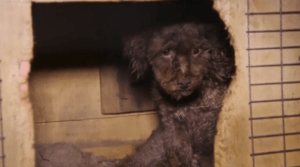 Pet expert Steve Dale writes Animal Rescue Corps saves animal in puppy mill