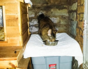 Cat expert Steve Dale comments on TNR and mistakes one shelter is making