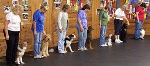 Pet expert Steve Dale talks dog training with Jennifer Arnold