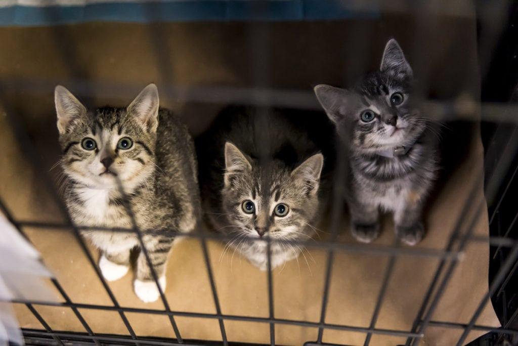 (ASPCA image)