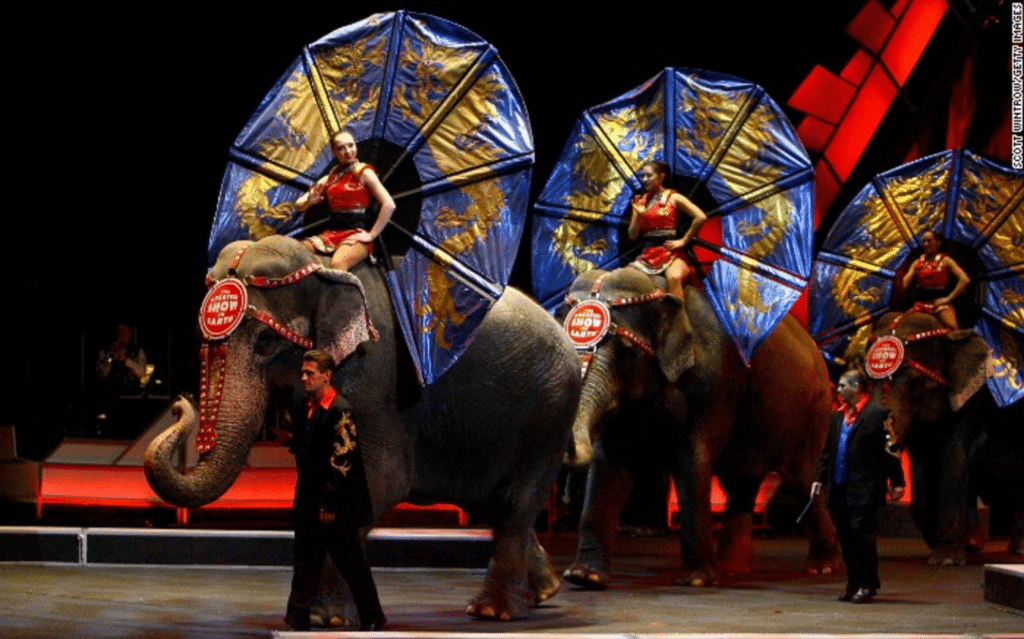 Steve Dale writes no more circus, good for elephant but what about those in the wild