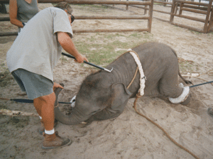 Circus was also fighting local bans against circuses using bullhooks, and even using live animals