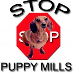 pet expert Steve Dale on WGN Radio about Naperville candidate allegedly supporting puppy mills
