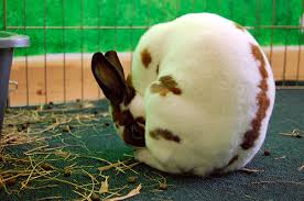This is normal healthy rabbit beahvior