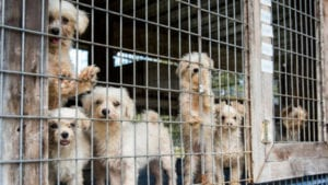 Why we fight puppy mills