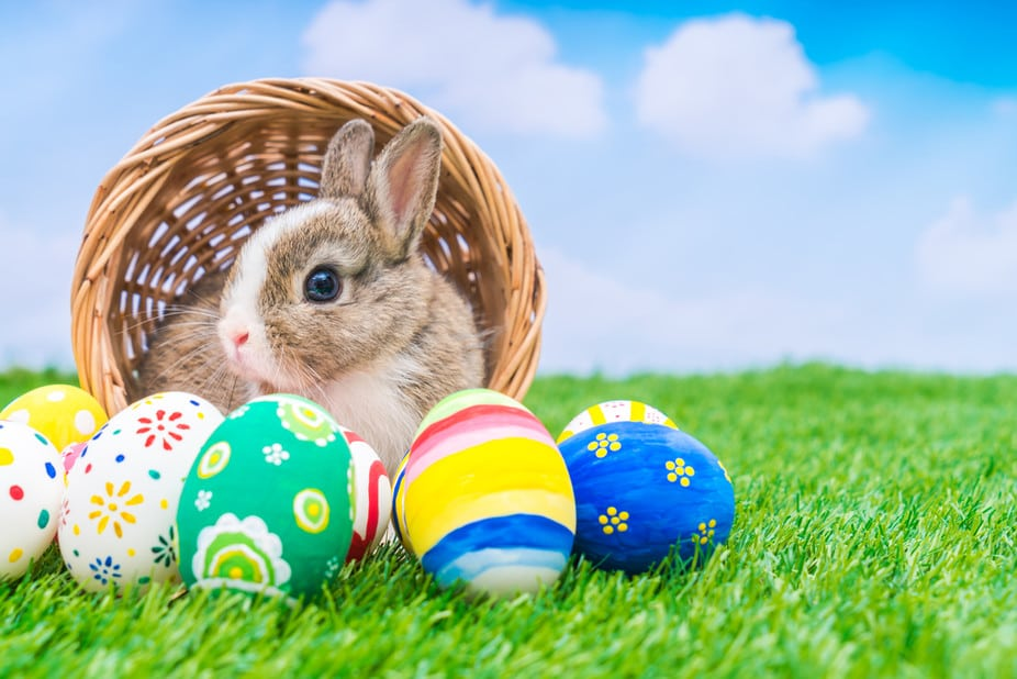 Hate to break the news: Rabbits are mammals and do not lay eggs!