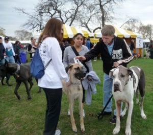 Dogs of all kinds get to know one another at Bark in the Park