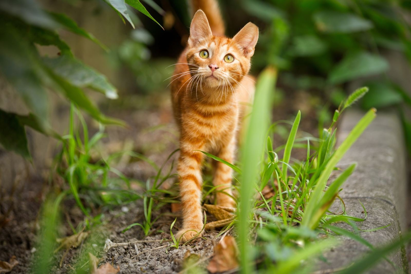 Flea and tick protection is important for cats too and Dr Cohn