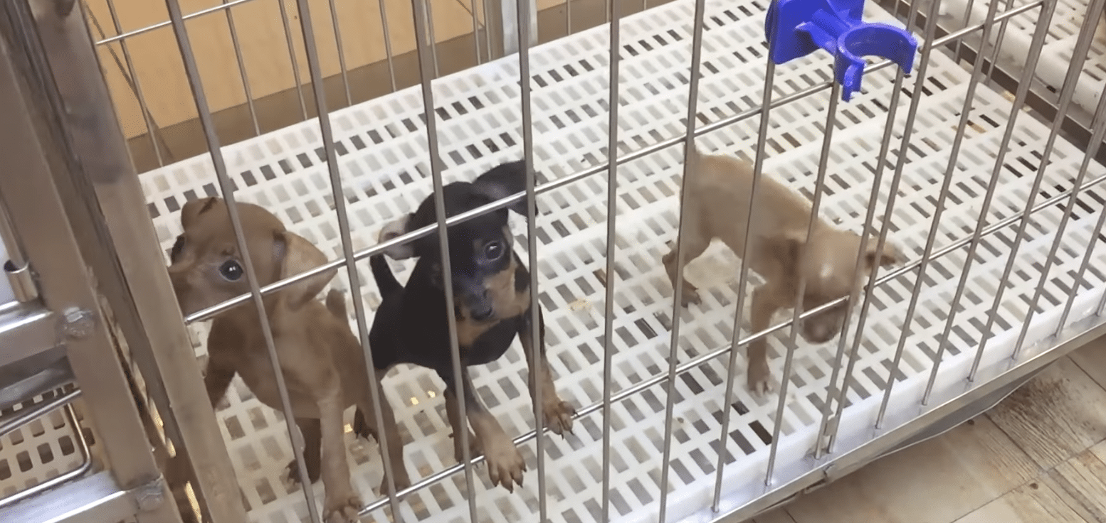 Pet Stores That Allow Adoption Of Dogs