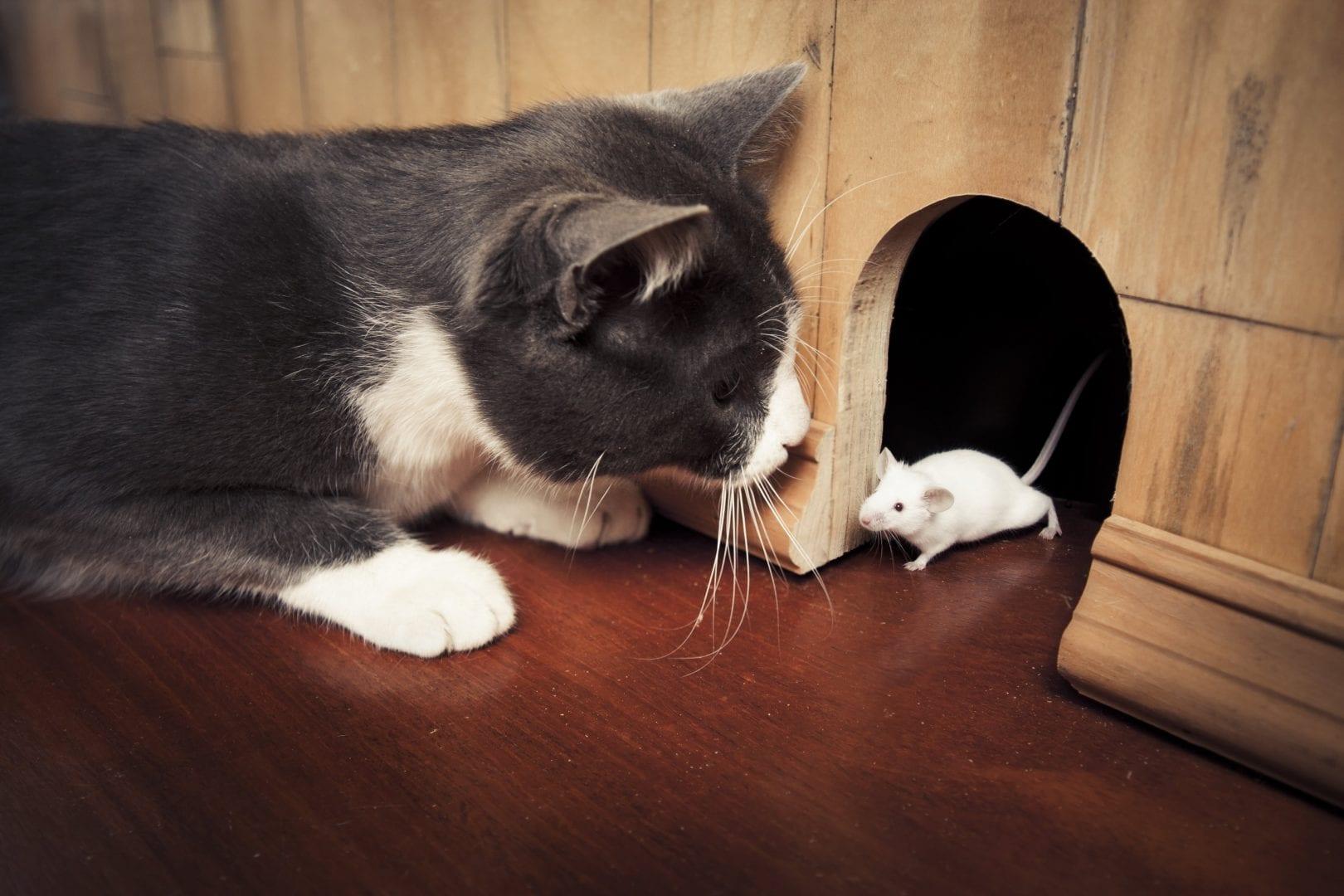 умеют коты ловить мышей