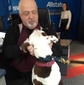 Steve Cochran of WGN Radio with Found dog Roxy seeking a home