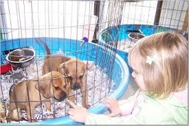 Pet expert Steve Dale describes his efforts to fight puppy mills