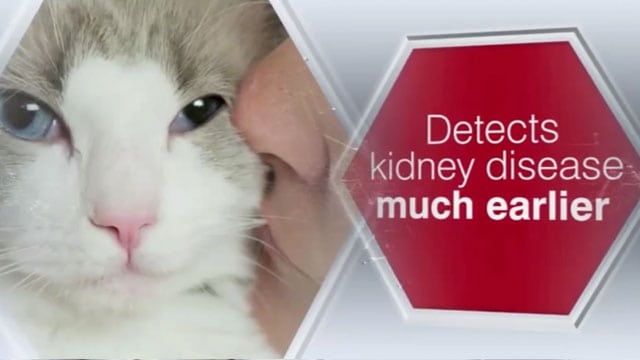 Steve Dale's Pet World on kidney disease in dogs and cats and how animals helped an autistic child