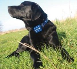 Veterinary behaviorist Dr. Karen Overall on shock collars