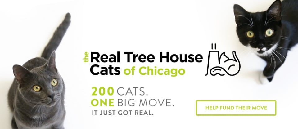 Chicago Humane Society Cats