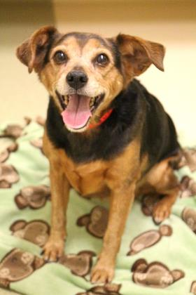 Ginger will be adopted with Steve Cochran and Steve Dale, join us on WGN