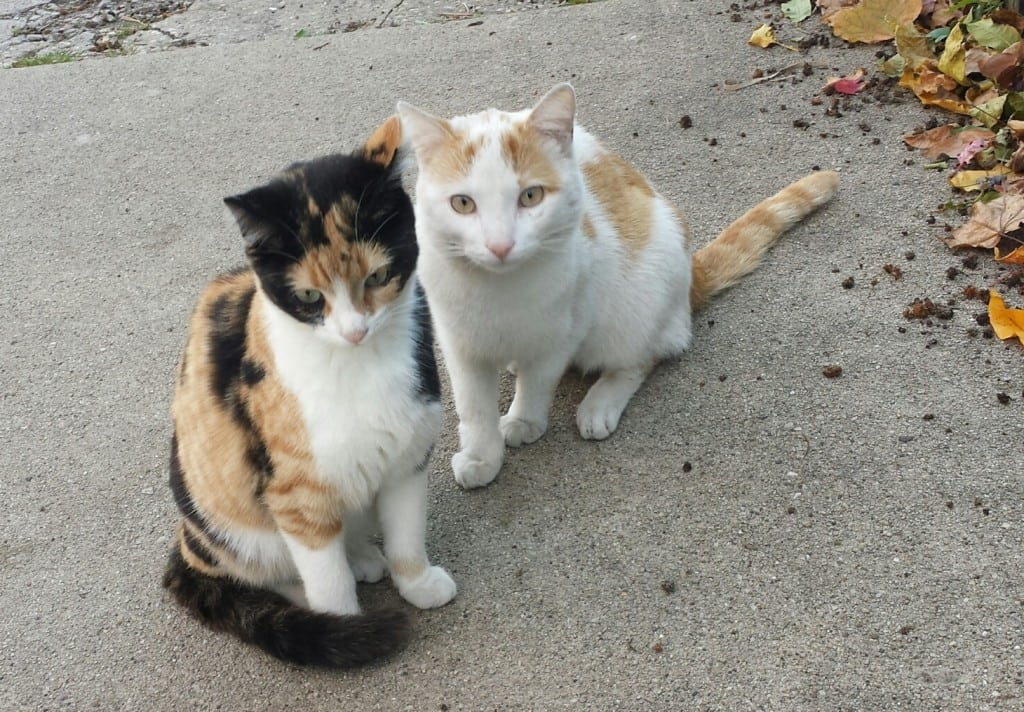 Researcher Anne Beall comments on feral or community cats