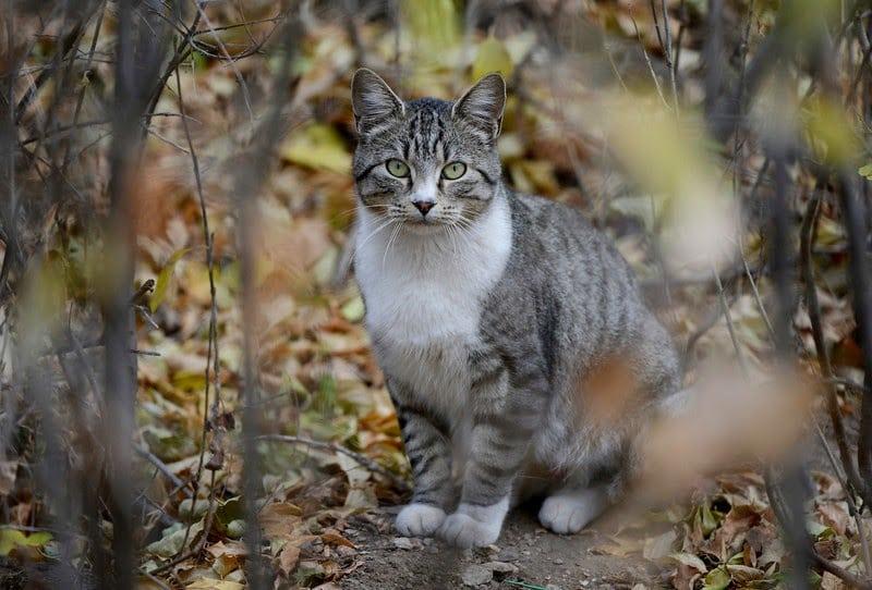 Steve Dale responds to John Kass newspaper column on TNR and feral cats