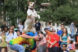Pet expert Steve Dale says pit bull type dogs are the All American dog