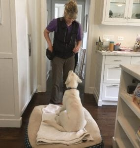 Pet expert Steve Dale writes about what to look for and not to look for in a dog trainer