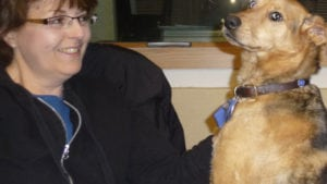 Pet expert Steve Dale writes about what to look for and not to look for in a dog training class