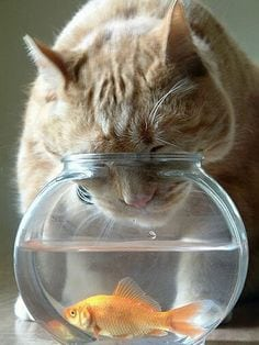 pet expert Steve Dale writes about cat or dog drinking from fish tank