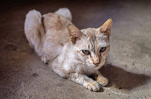 American Association of Feline Practitioners hyperthyroid cats with cat expert Steve Dale