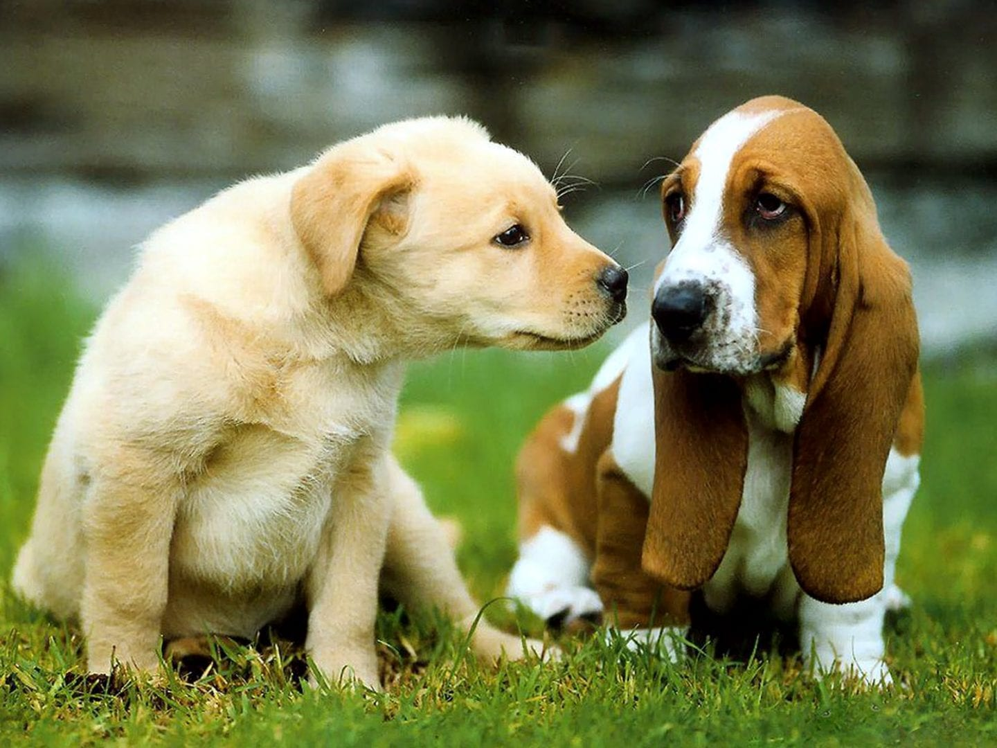 Dogs don39t like fireworks now what do to do to help dogs for How to introduce a dog to a new dog