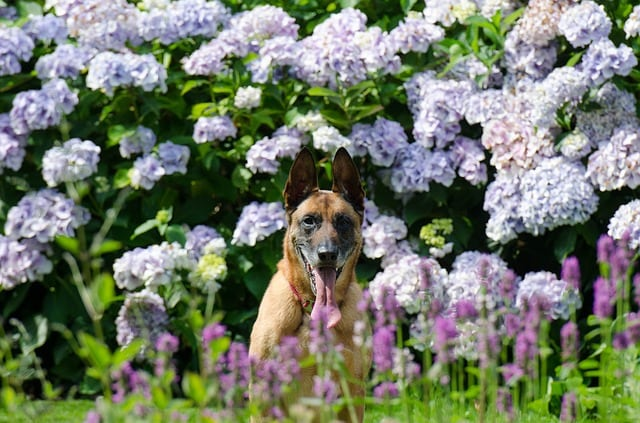 Pet expert writes about advantages of organic lawns