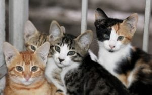 Kittens tend to be adopted declawed or not, but it's a particular shame to declaw a kitten - they can easily be instructed on where to scratch