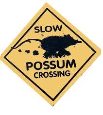 Pet expert Steve Dale notes opossum eat ticks and fend off tick disease