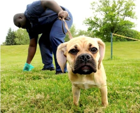 Can A Dogs Poop Be Too Big