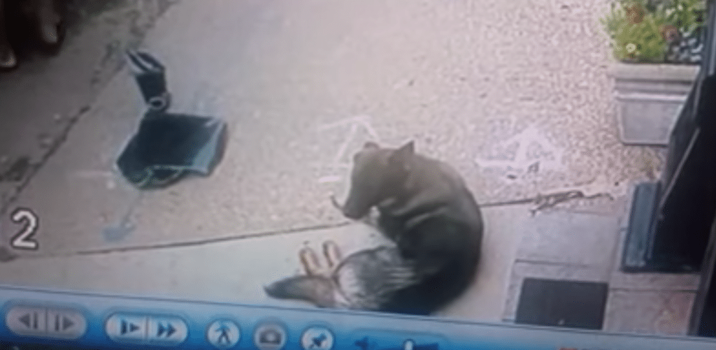 Did the criminals save this dog's life?
