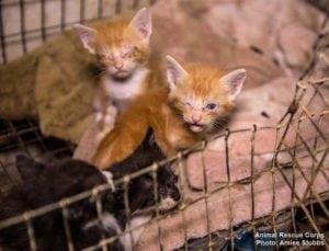 Animal Rescue Corps, photo: Aimee Stubbs