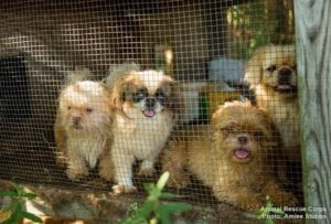 Dogs rescued in Mississippi from Animal Rescue League (photo: Aimee Stubbs)