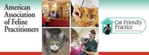Pet expert Steve Dale Take Your Cat to the Vet Day