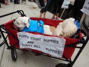Pet expert Steve Dale on Puppy Mill Project Puppy Mill Awareness Day