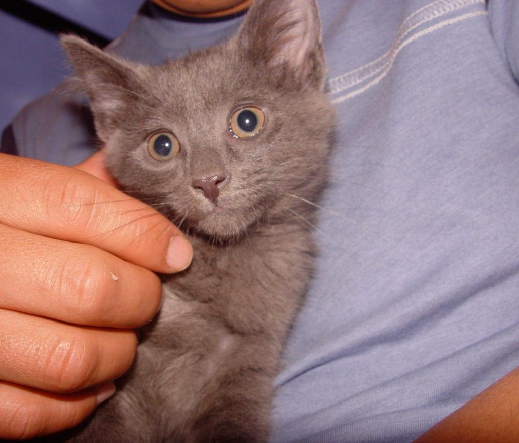 So when do you spay/neuter kittens?