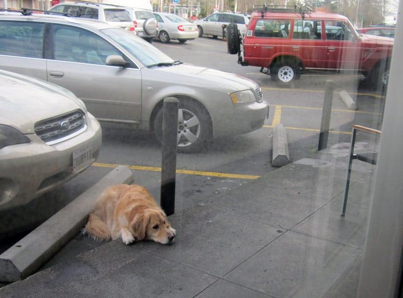 Pet expert Steve Dale on dog thefts