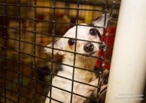 (Photo: Animal Rescue Corps)